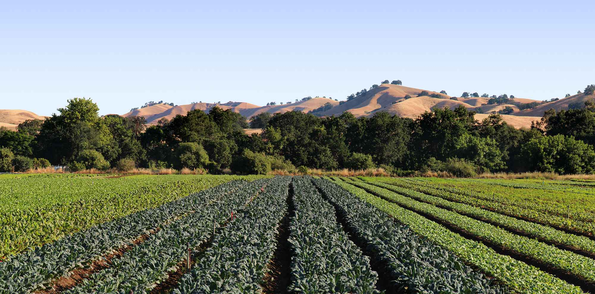 capay california organic farm